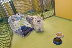 002 - Pensione per cani e gatti