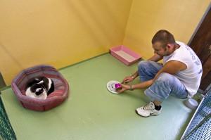 013 - Pensione per cani e gatti