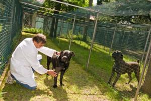 066---Pensione-per-cani-e-gatti